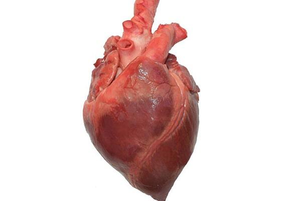 قلب چگونه کار میکند؟