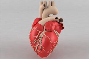 قلب انسان چند دریچه دارد-min